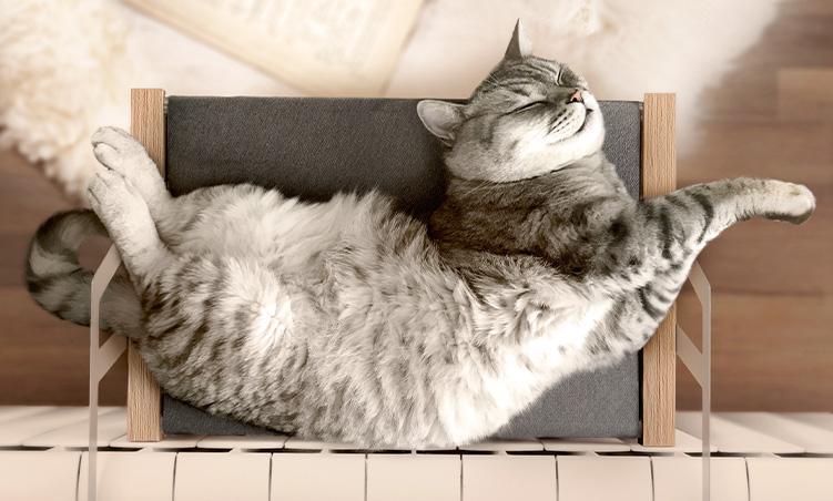 kocia-potrzeba-snu.jpg
